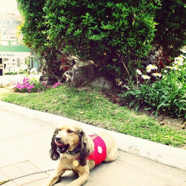 Gozando del calido sol ... Lima Charlie Dogs charlie