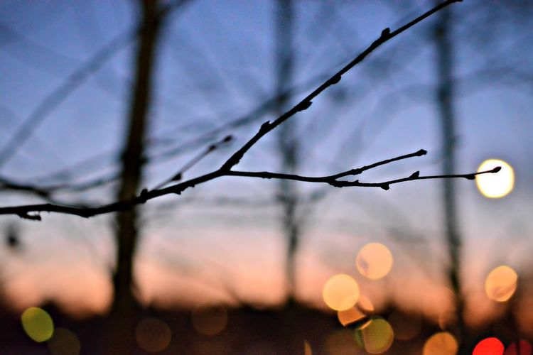 Close-up Closeup Evening Focus On Foreground Kvist Kväll No People Outdoors Relax Silhouette Spray Stick Sweden Switch Trees Twig