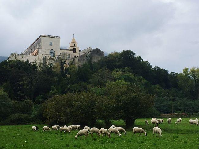 Italy Italia Italy❤️ Campania Salerno Baronissi Convento Pecore Animali Church Convent Hill Animals Sheep Sheeps