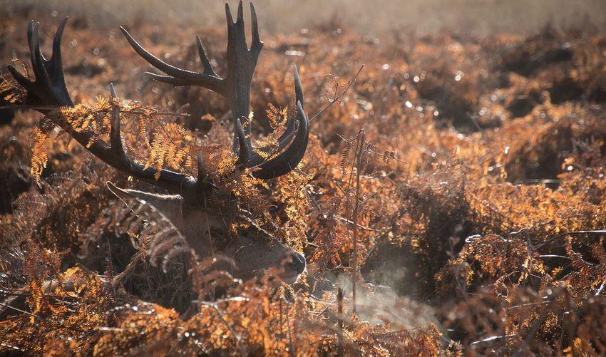 Close-Up Deer Amidst Plants