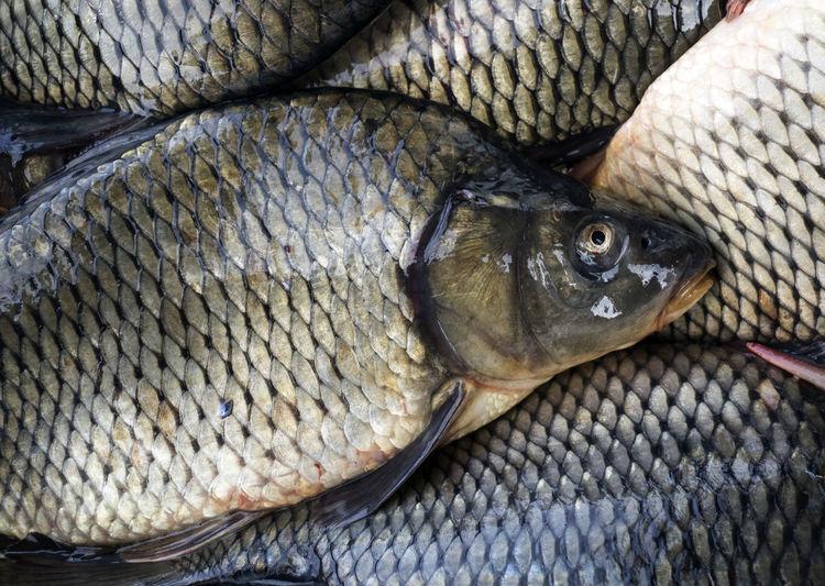 Full Frame Shot Of Carps For Sale At Fish Market