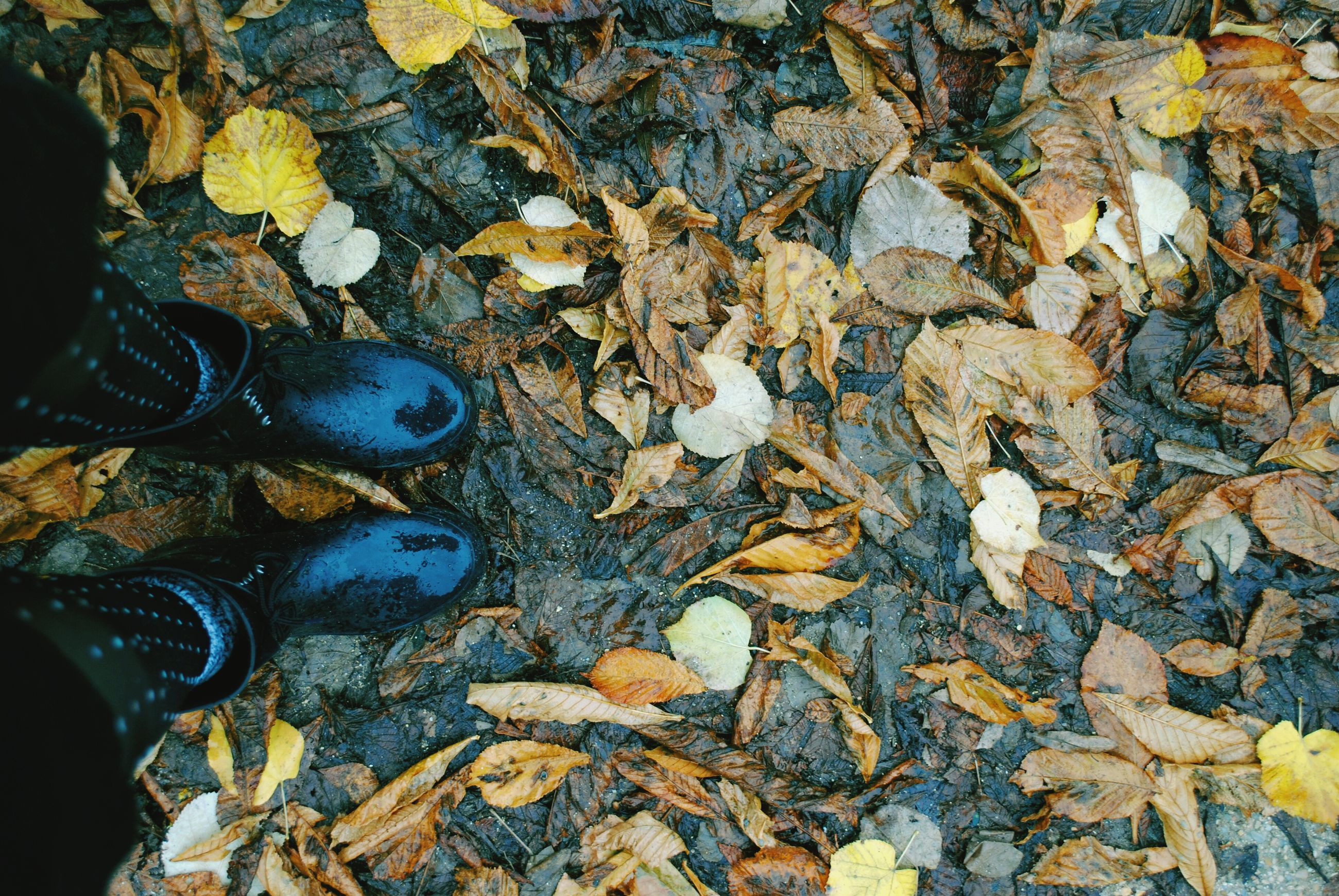 high angle view, shoe, abundance, close-up, autumn, leaf, day, full frame, outdoors, directly above, low section, stone - object, textured, large group of objects, backgrounds, part of, nature, field, dry, still life
