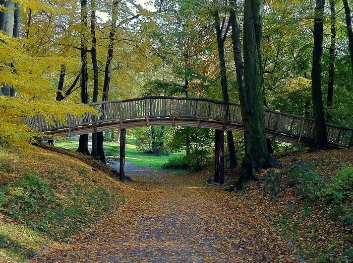 Autumn in the Jenisch Park Hamburg Bridge Autumn Collection Bridgeporn Bridge View Nature Jopesfotos - Nature Jopesfotos - Bestefotos