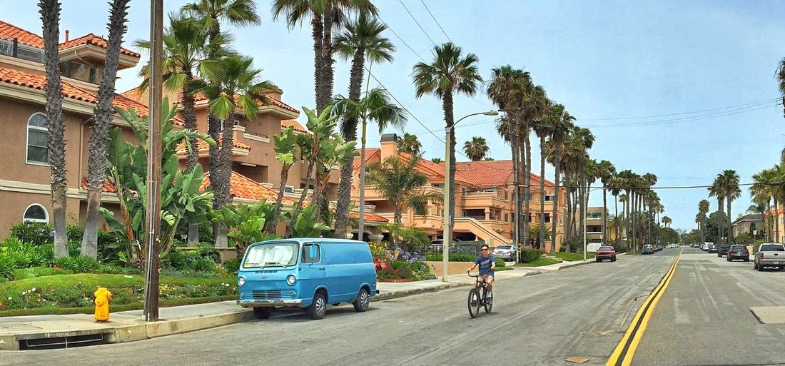 Embrace Urban Life Cycle California Palm Tree City Street Tree Outdoors Urban Road Architecture People Day Adult Adults Only