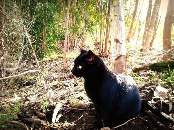 mi pequeño precioso! :3 Beautiful Cat Nature Photography Cats Photography Cats Of EyeEm Cats Country