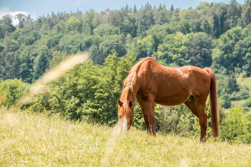 Horses on the green meadow Agriculture Animal Animal Themes Animal Wildlife Day Domestic Domestic Animals Field Grass Herbivorous Horse Land Livestock Mammal Nature No People One Animal Outdoors Pets Plant Tree Vertebrate