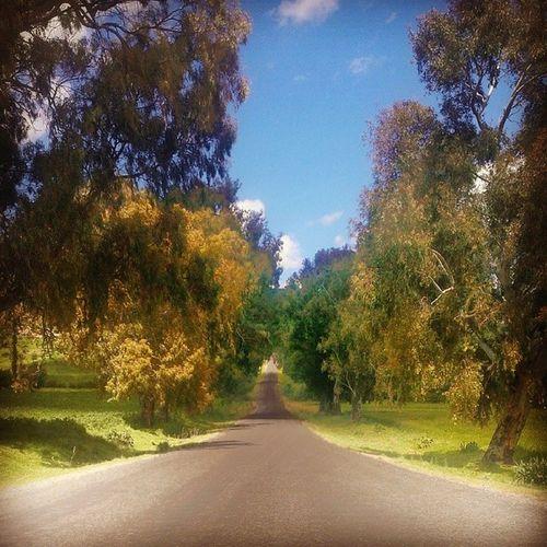 AntiGlag Randonn ée Amigos Instafriends nature road
