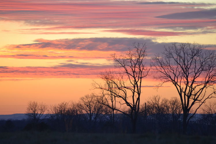 Sunset Sunset Tree Silhouette Beauty In Nature Nature Orange Color Scenics Bare Tree Sky Landscape Dusk Pastel Colored Outdoors Sunlight Multi Colored EyeEm Ready   Autumn Mood