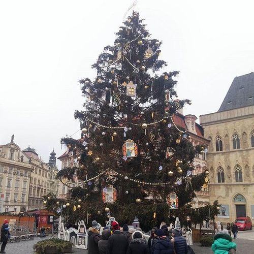 🎄 Christmastreegoals