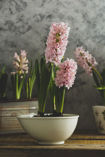 Close-up of pink flower in vase on table