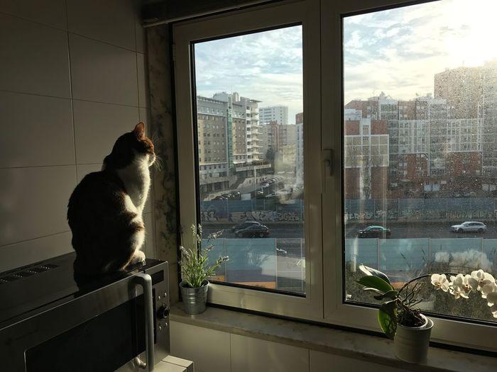 Cat pensive