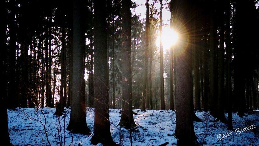 Running 2015 Im Wald und freue mich auf die Sonne ...