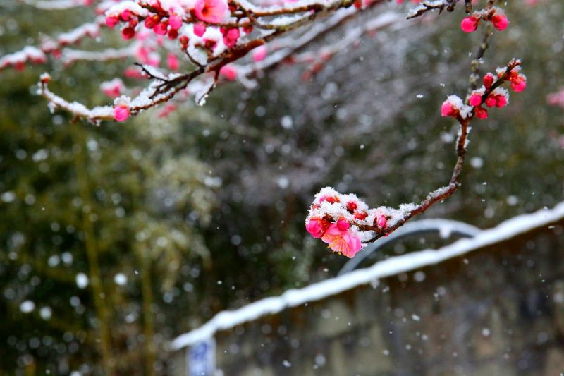 Winter cherries growing on tree during winter