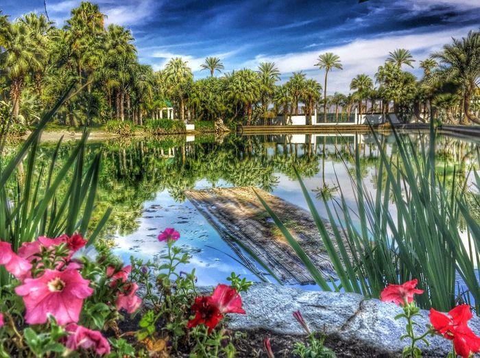 Timages Coachella Coachella2016 Empirepoloclub Medjoollake Medjool Laquinta Palmdesert Palmsprings Palm Springs Palmtrees Palm Trees Ranchomirage Indianwells Lake EyeEmBestPics Eye4photography  EyeEm Best Edits Popular Photos