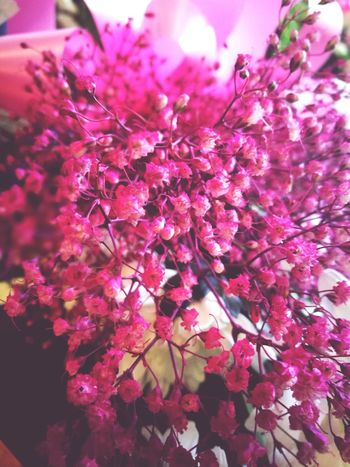 Baby Breath 😍 Flower Blossom Beauty In Nature Growth Pink Color Fragility Nature