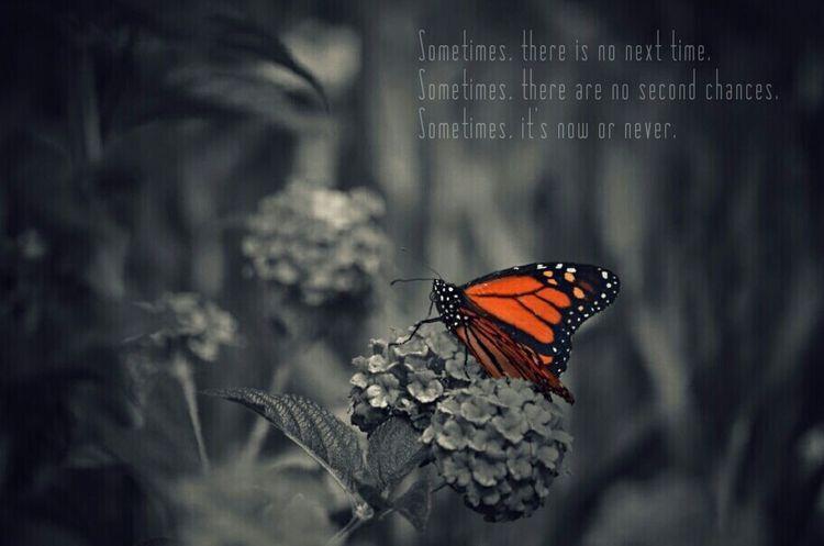 Reflection_collection Eyeem Reflexion Reflection_shotz Mariposas Monarcas Butterfly Beautiful Nature