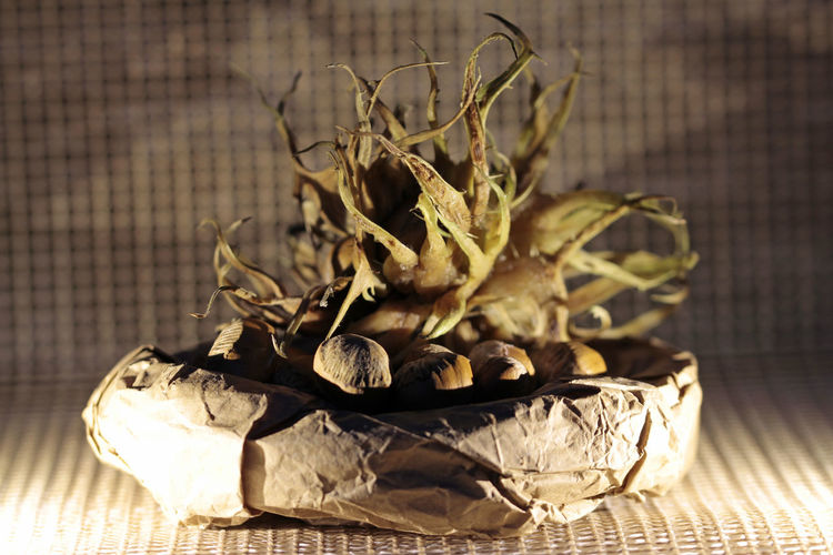 Close-up of dried plant on table
