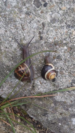 UniSon Side By Side Snail Race Race Snail Collection Nature Nature_collection Nature Photography Nature On Your Doorstep Slimy Slimy Snails Swirl Swirly Concrete Wall Concrete Wall Snail Shell The EyeEm Collection Snails Snails Pace Rain MolluscaGastropoda Rainy Day Two Is Better Than One