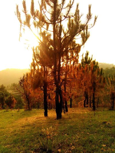 out beyond the idea of wrongdoings and rightdoings Landscape Pines Evening Grass Sunset Trees A New Perspective On Life Capture Tomorrow