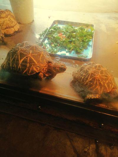 もぐもぐタイム 王子動物園 Zoo Reptiles Animals Kobe-shi,Japan L Love Animals Turtle リクガメ かめ Ojizoo