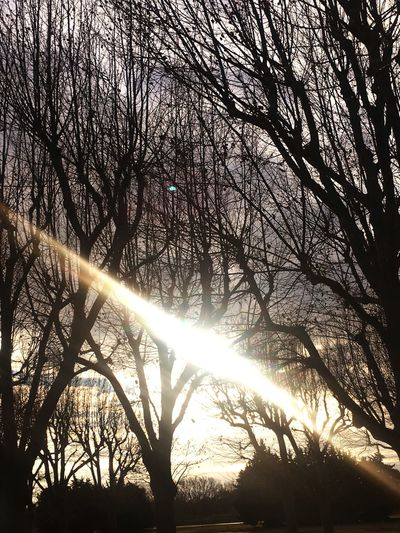 Sun Sunbeam Sunlight Tree Bare Tree Nature Beauty In Nature Lens Flare Low Angle View Tranquility Scenics Branch Silhouette Tranquil Scene Streaming No People Sky Shining Sunset Winter