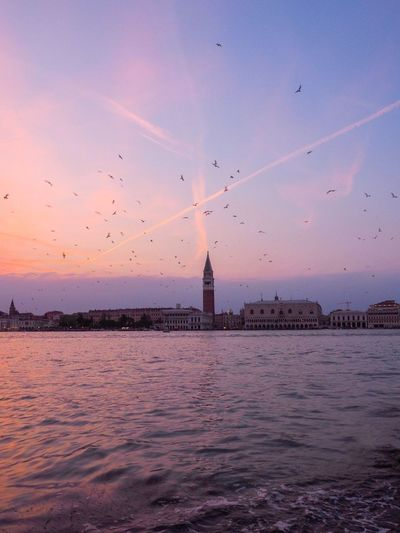 Live For The Story Venezia Venice Italia Italy Celstalis Celestalisblue Seagull Sunrise