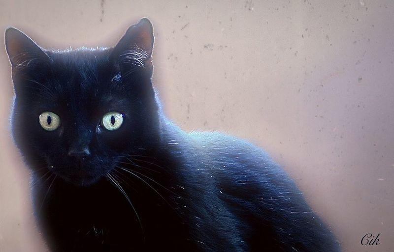Cat Cat Eyes Cat EyeEm Taking Photos EyeEm Best Edits Cats EyeEm Gallery Cat Lovers Cats Of EyeEm Pet Portraits