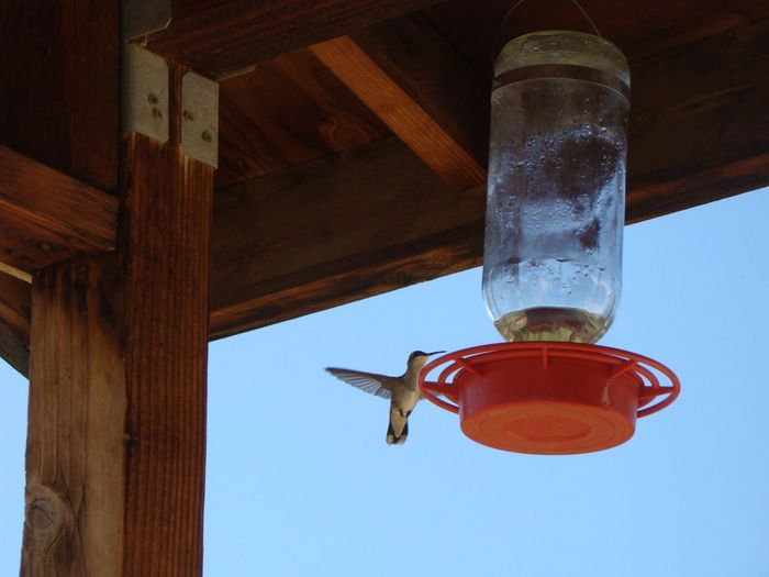 Low angle view of hummingbird hovering by bird feeder hanging on roof in porch
