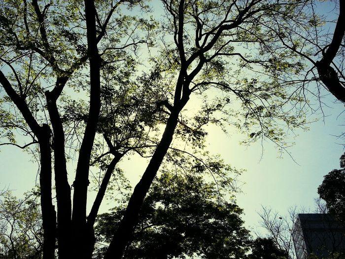 Enjoying Life EyeEm Nature Lover Sunshine