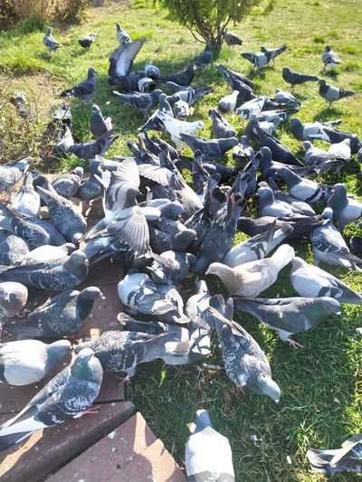 High angle view of pigeons on lake