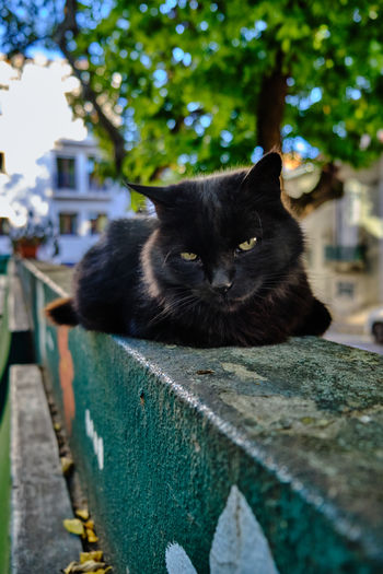 Portrait of black cat on retaining wall