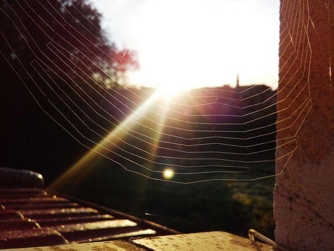 Spider Macro Spider Sunlight Newmonth