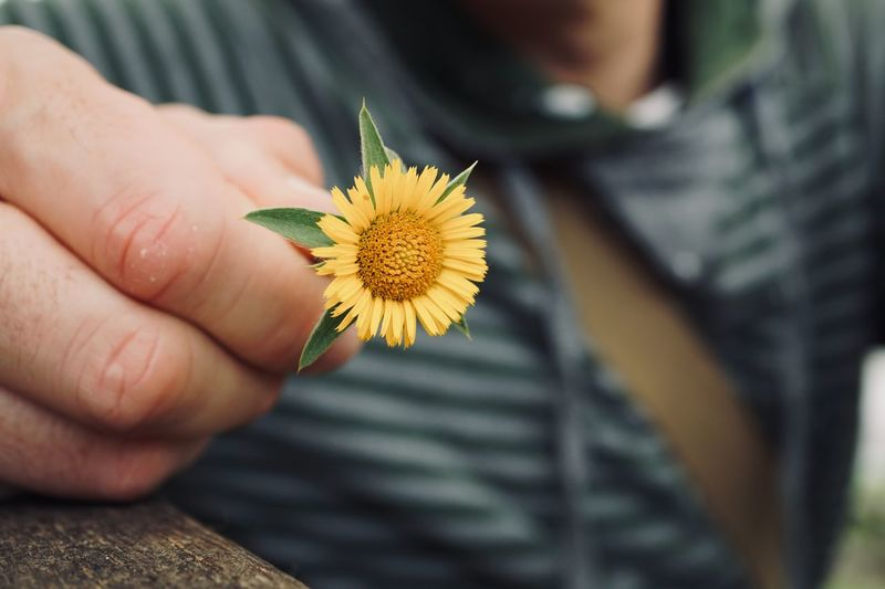 hand with a beautiful flower plant in the nature Hand Finger Body Part Flower Plant Romantic Fragility Freshness Beauty In Nature Beautiful Streetphotography Street Outdoors Petals Decoration Decorative Human Hand Human Body Part