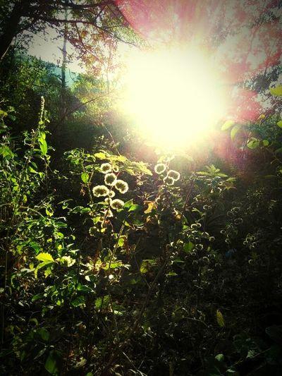 The sunshine First Eyeem Photo