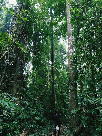 Oxygen #Nature  #lovenature #LoveLife  Tree Forest Branch Bamboo - Plant Bamboo Grove Green Color Woods Green Plant Life