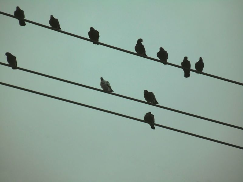 Learn & Shoot: Simplicity Birds On A Wire The Minimals (less Edit Juxt Photography) Samsung Camera Looking Up Rural Scenes Silhouettes
