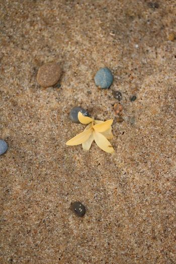 Lost Flower Beach Sand No People Sea Life Close-up Day Outdoors Coloma, Michigan