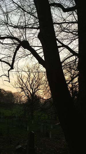 Silhouette of bare trees against sky