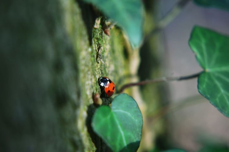 Close-up of ladybug by leaf on wall