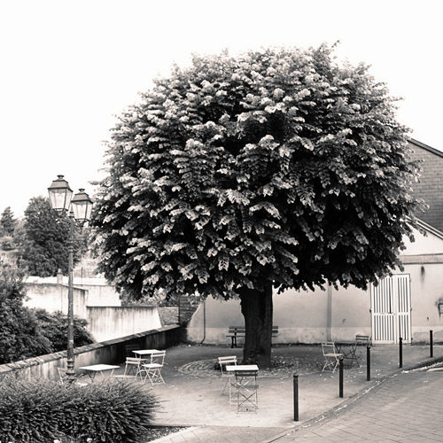 Empty No People Outdoors Public Square Sepia Tranquility Tree
