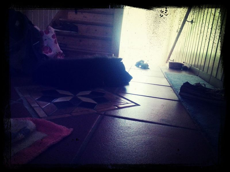 Mein Hund <3 Hanging Out
