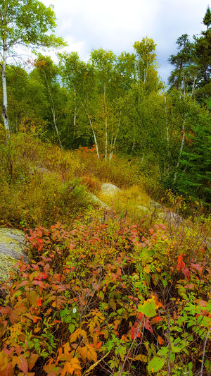 Outdoors Tree Nature No People Beauty In Nature Multi Colored Leaf Hikingadventures Colour Everywhere Fall Is Here. Oh Canada! EyeEmNewHere Just Passing Through The Week On EyeEm EyeEm Selects Creativity Has No Limits EyeEm New Here Half The World Away Fall Beauty Beauty In Nature Nature Backgrounds Green Color Red Color