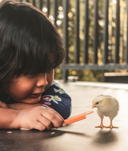 Full length of cute boy holding bird