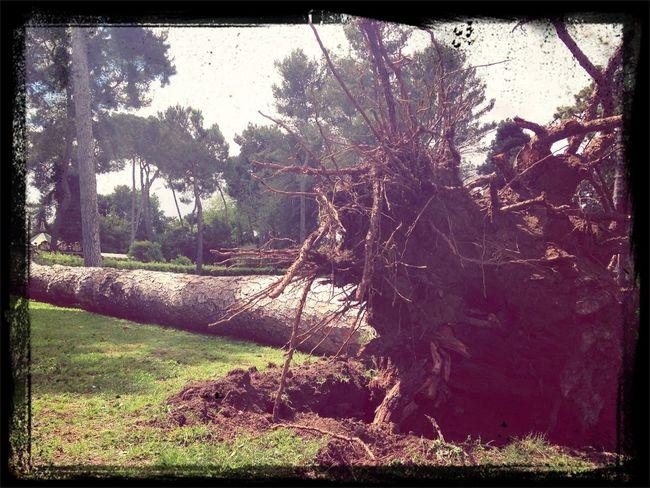At The Park Tree Fallen Tree