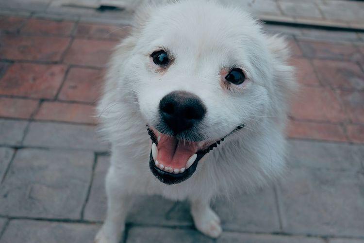 High angle portrait of white dog