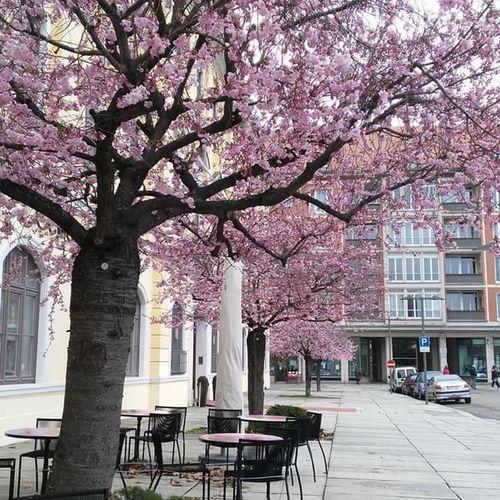 Sidewalk Flower Day Blossom Tree Lilili