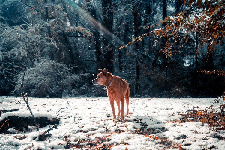 Horse in forest during winter