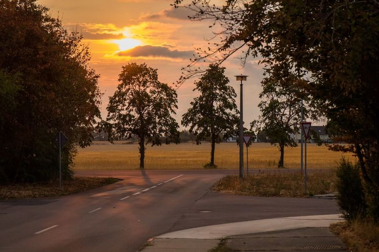 Plant Tree Sunset Sunlight Sky Road Nature No People The Way Forward Cloud - Sky Transportation Direction City Sun Boundary Beauty In Nature Growth Tranquility Fence Barrier