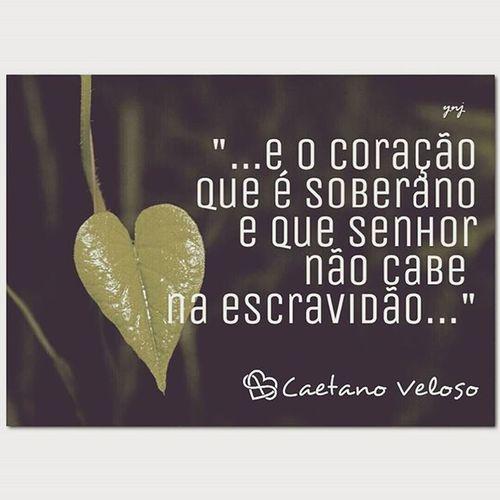 CaetanoVeloso Caetanoforever MPB Coracaosoberano ♡