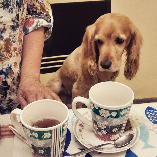Desayuno Perro Bello Qenqo breakfasttime doglover